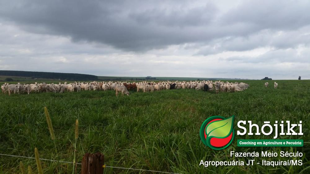 Agropecuária JT - Fazenda Meio Século - Itaquiraí/MS - Junho/2018